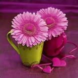 Fleurs dans pots