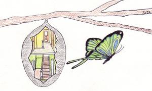 chrysalide papillon